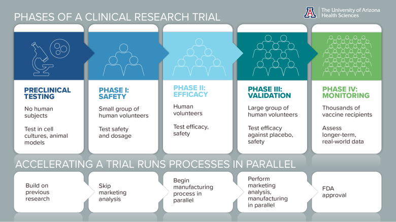 Phases of a Clinical Trial